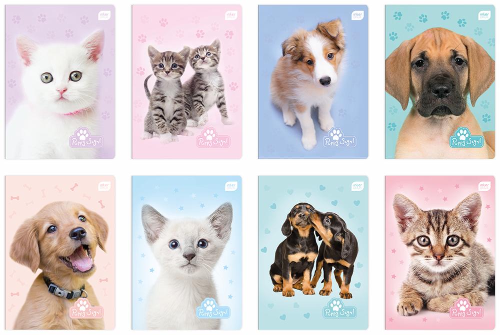 Zeszyt A5 16 # Puppies, Kratka  21262272